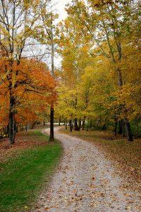 A Trail at Lone Oaks Farm